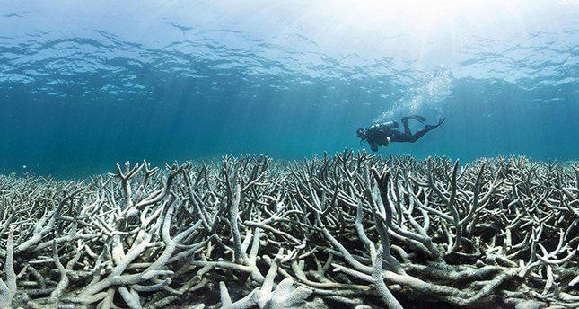 dead great barrier reef