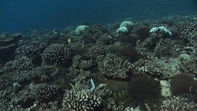 great barrier reef is dead