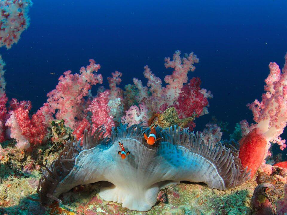 breathtaking-great-barrier-reef