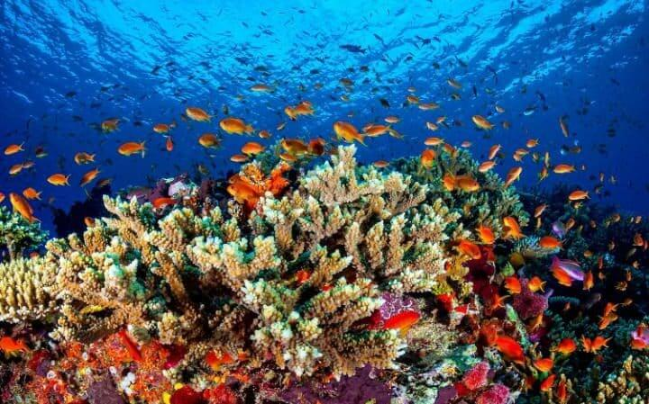 corals-great-barrier-reef
