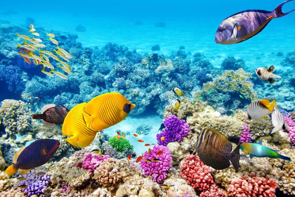fished-at-great-barrier-reef