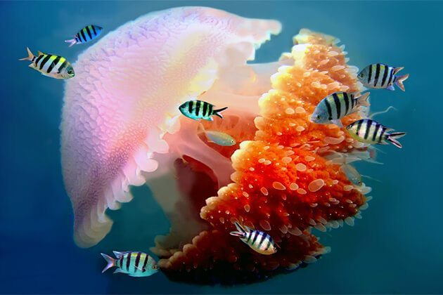 great-barrier-reef-cruising3