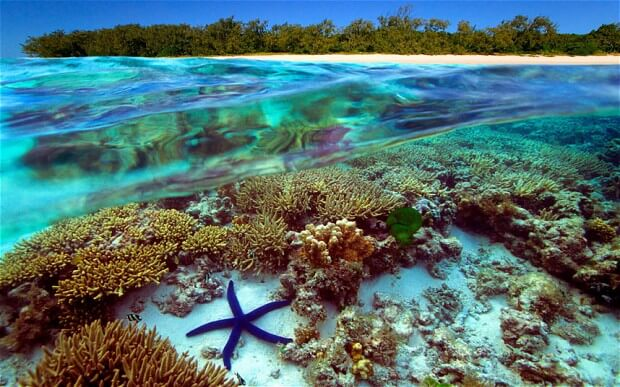 the-great-barrier-reef-ecosystem