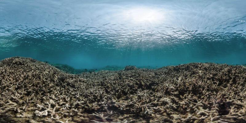 death in great barrier reef